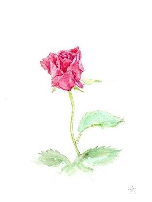 秋のバラ小.jpg