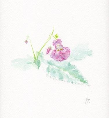 紫吊舟小.jpg